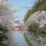 4月の置賜 米沢市 上杉公園の桜と赤い橋