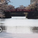 おきたまの桜巡り《米沢市編》