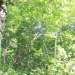 温身平で森に癒される(小国)