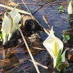 春を探しにでかけよう!_置賜番外編(七ヶ宿)