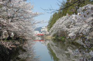 上杉公園の桜と赤い橋