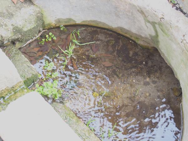 笹原の井戸