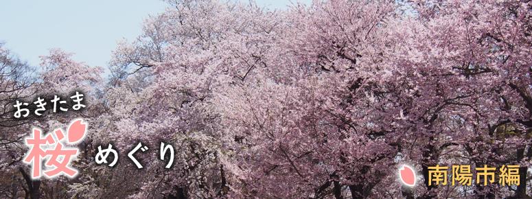 おきたま桜めぐり 南陽市編