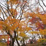 Gokuraku-Jodoな烏帽子山公園、紅葉の嵐です