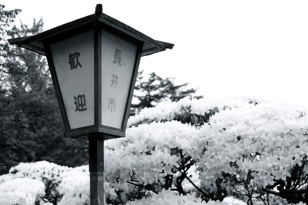 長井市電灯