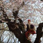 花咲じいさんもいる!?「日本さくら名所100選」@赤湯・烏帽子山公園